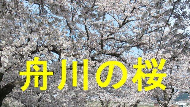 舟川べりの桜のアイキャッチ画像です