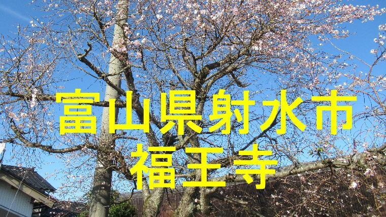 福王寺アイキャッチ画像